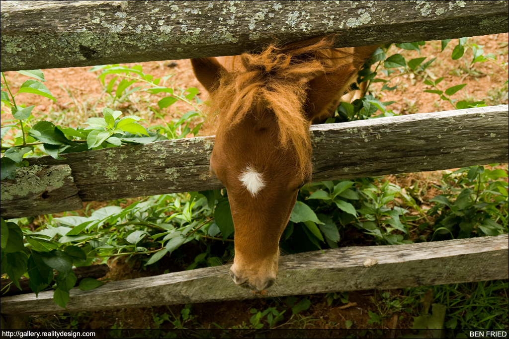 The Cutest Horse in the World 2